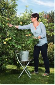 Tara smak epler