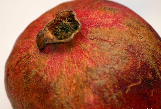 Image: Matvalg 2010 – Hvordan kan vi redusere mengden mat som kastes?