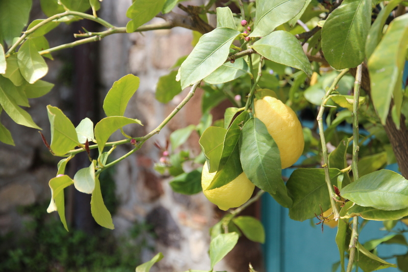 Pasta al limone - sitroner