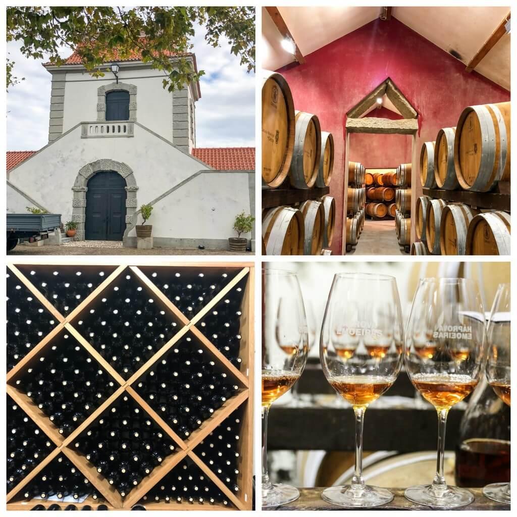 Matreise Lisboa - vingård